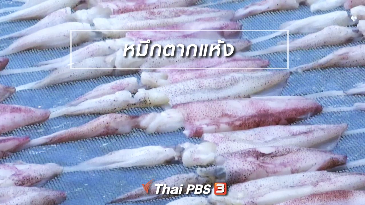 จับตาสถานการณ์ - ตะลุยทั่วไทย : หมึกตากแห้ง
