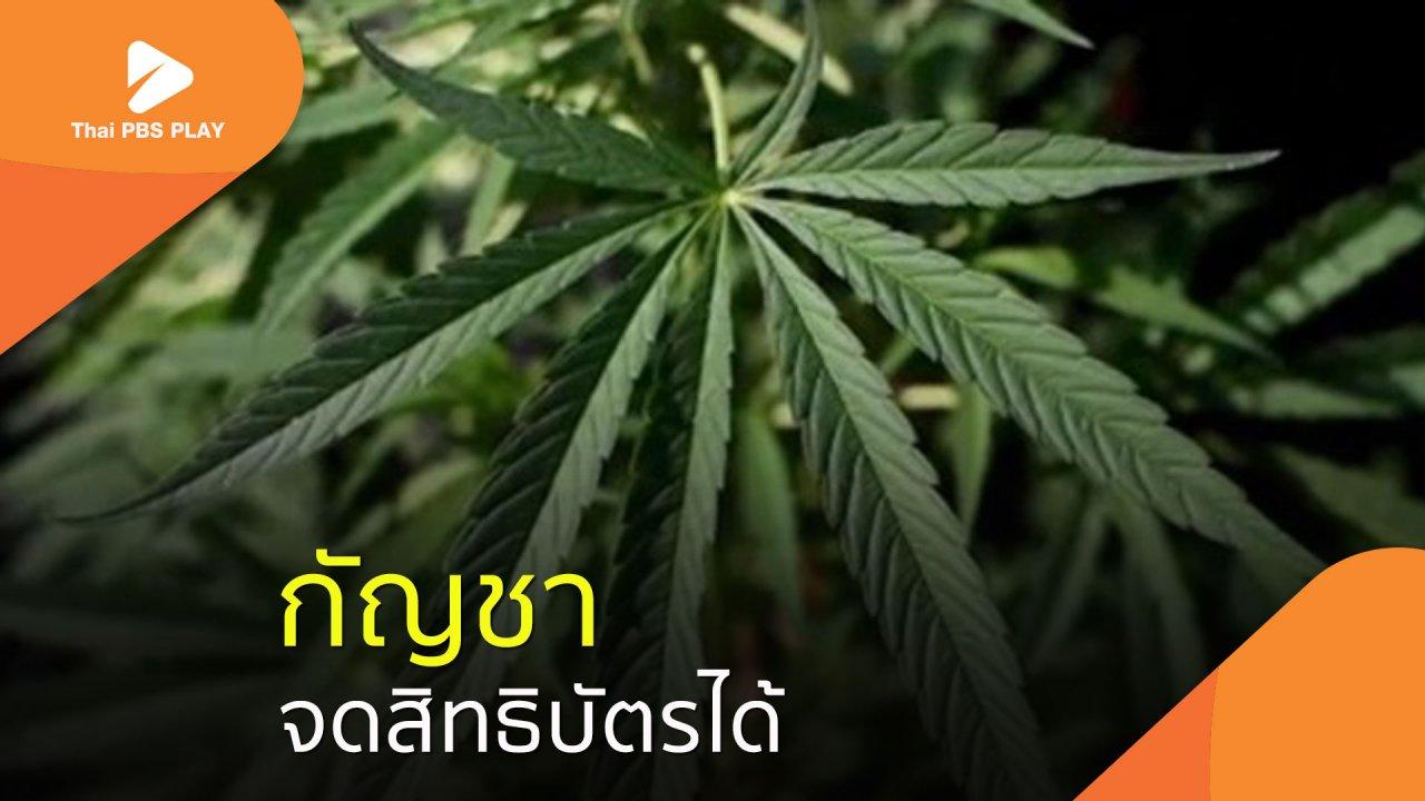 Thai PBS Play - กัญชาจดสิทธิบัตรได้