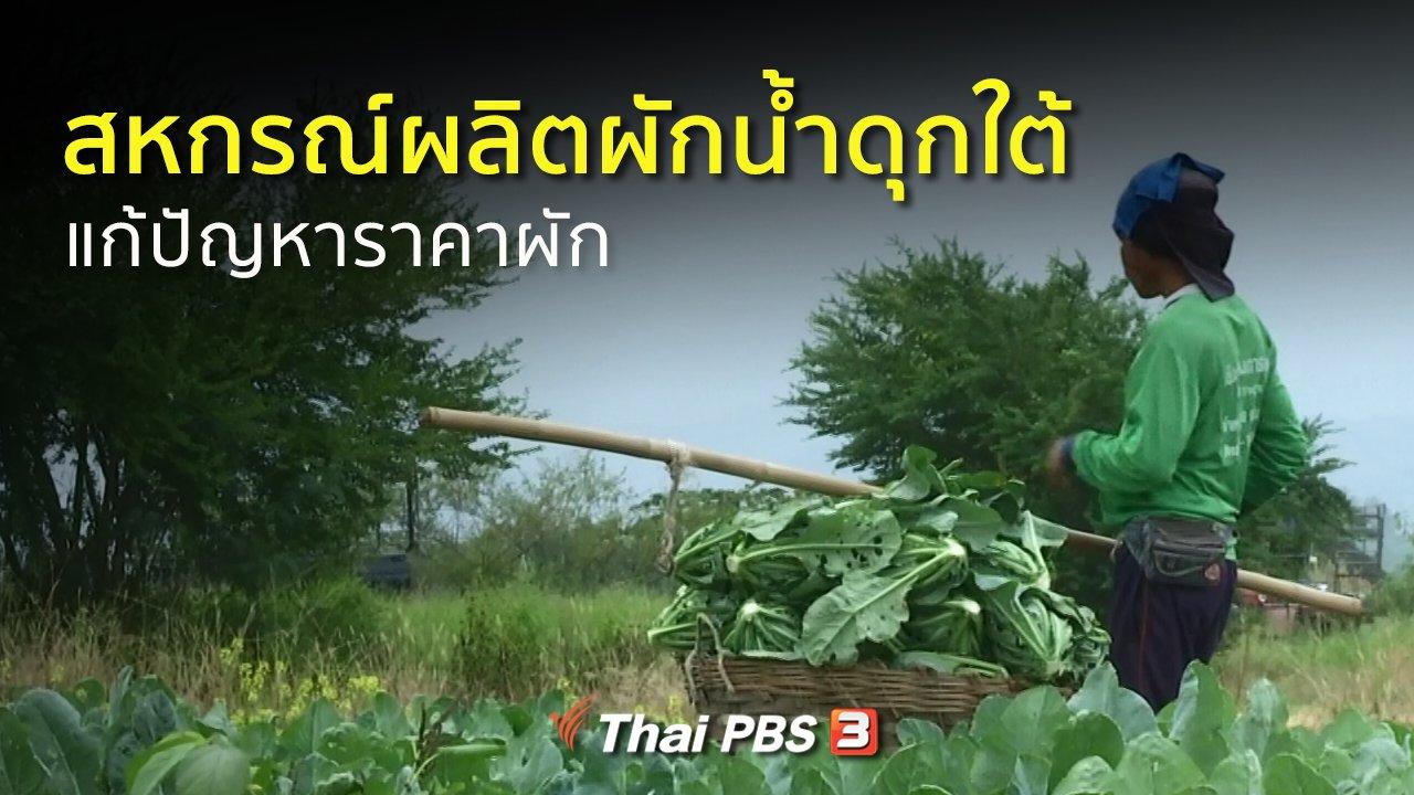 ทุกทิศทั่วไทย - อาชีพทั่วไทย :  สหกรณ์ผลิตผักน้ำดุกใต้แก้ปัญหาราคาผักตกต่ำ