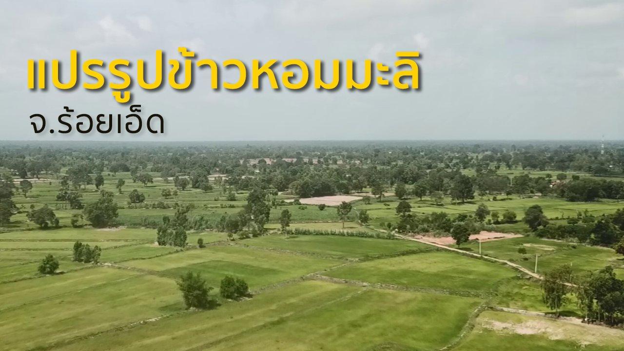 ทุกทิศทั่วไทย - ชุมชนทั่วไทย : แปรรูปข้าวหอมมะลิร้อยเอ็ด