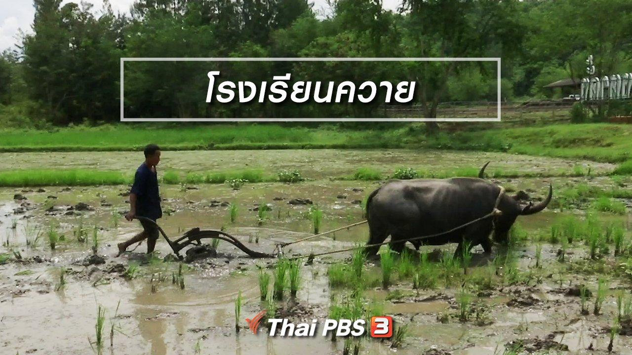 จับตาสถานการณ์ - ตะลุยทั่วไทย : โรงเรียนควาย