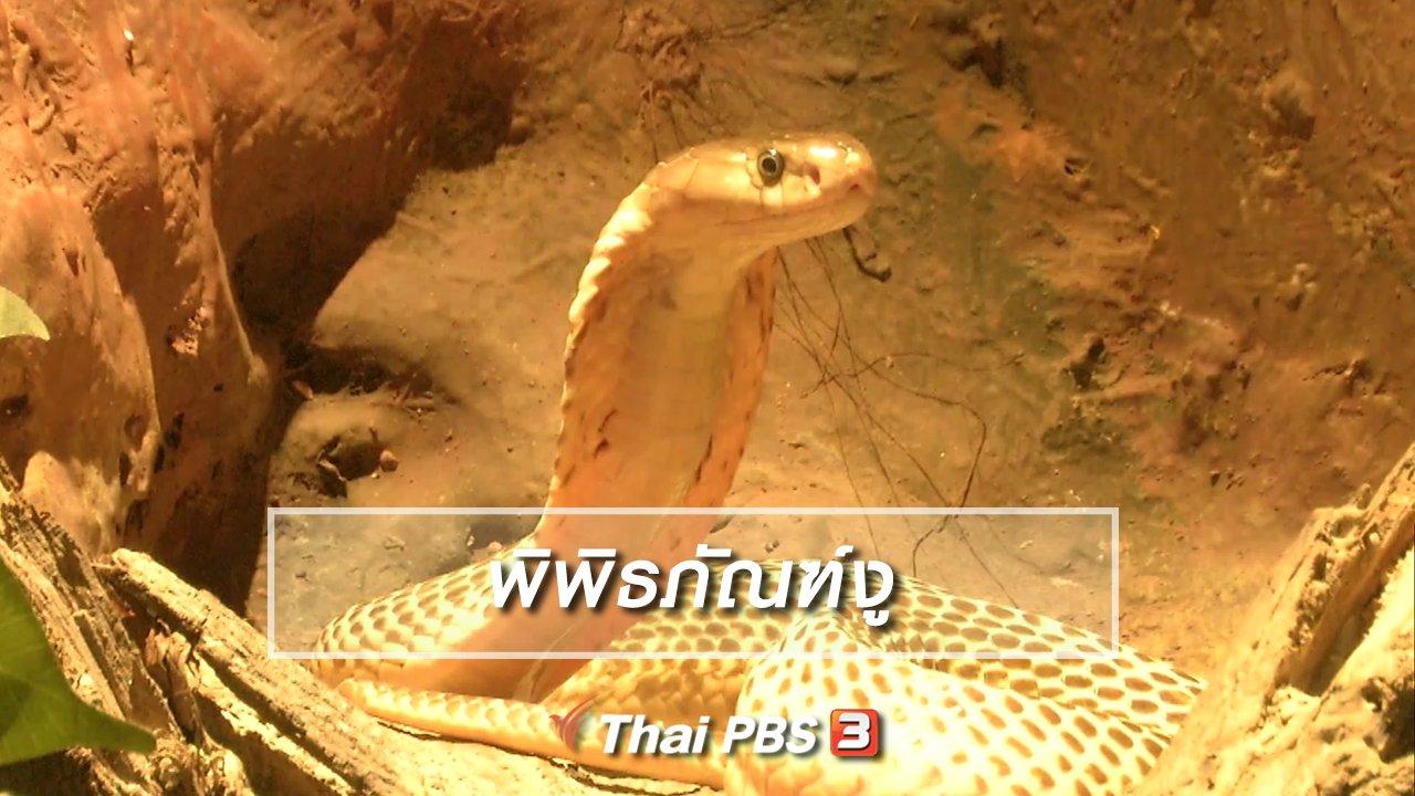 จับตาสถานการณ์ - ตะลุยทั่วไทย : พิพิธภัณฑ์งู