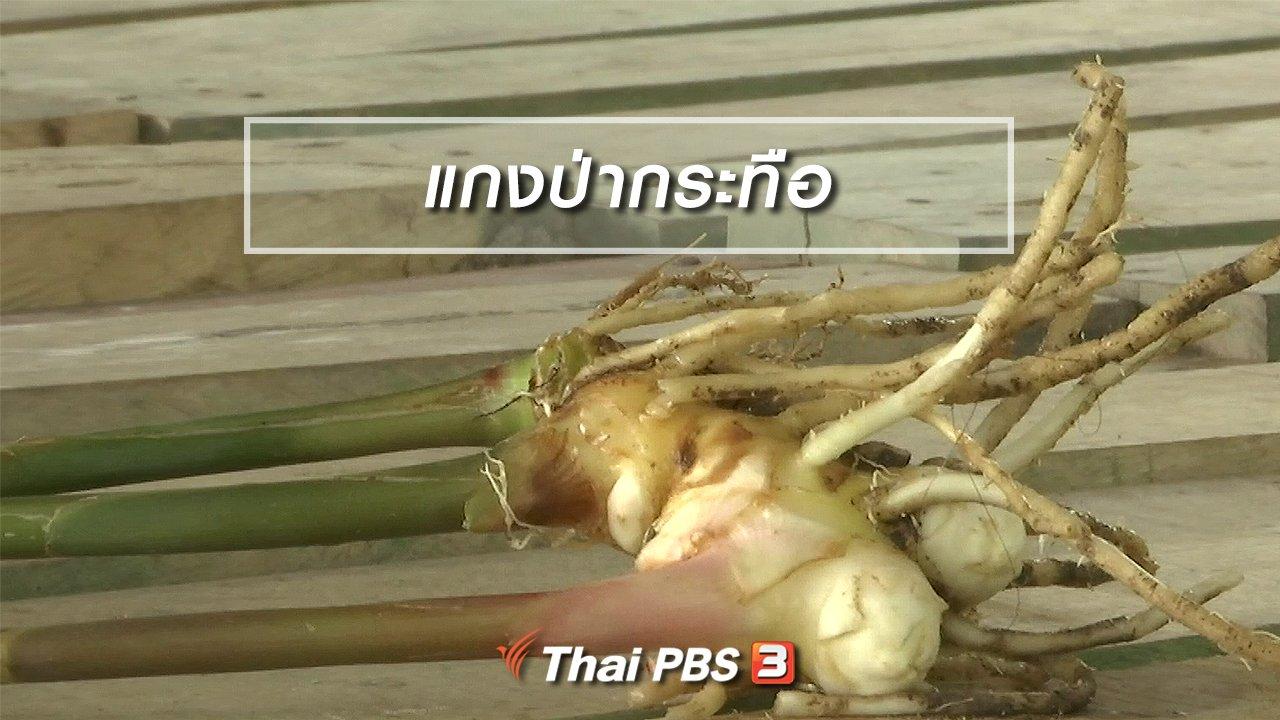 จับตาสถานการณ์ - ตะลุยทั่วไทย : แกงป่ากระทือ