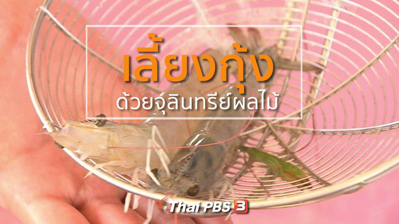 ทุกทิศทั่วไทย - อาชีพทั่วไทย : เลี้ยงกุ้งด้วยจุลินทรีย์ผลไม้