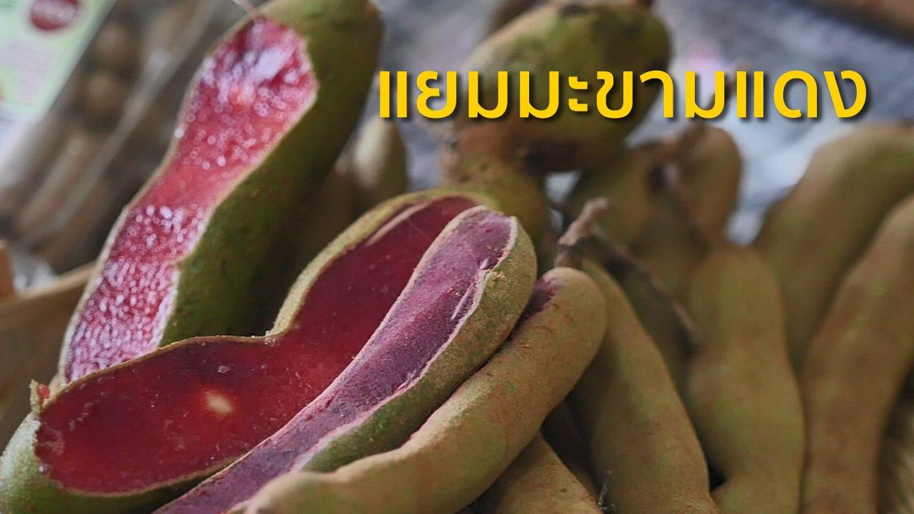ทุกทิศทั่วไทย - อาชีพทั่วไทย : แยมมะขามแดง