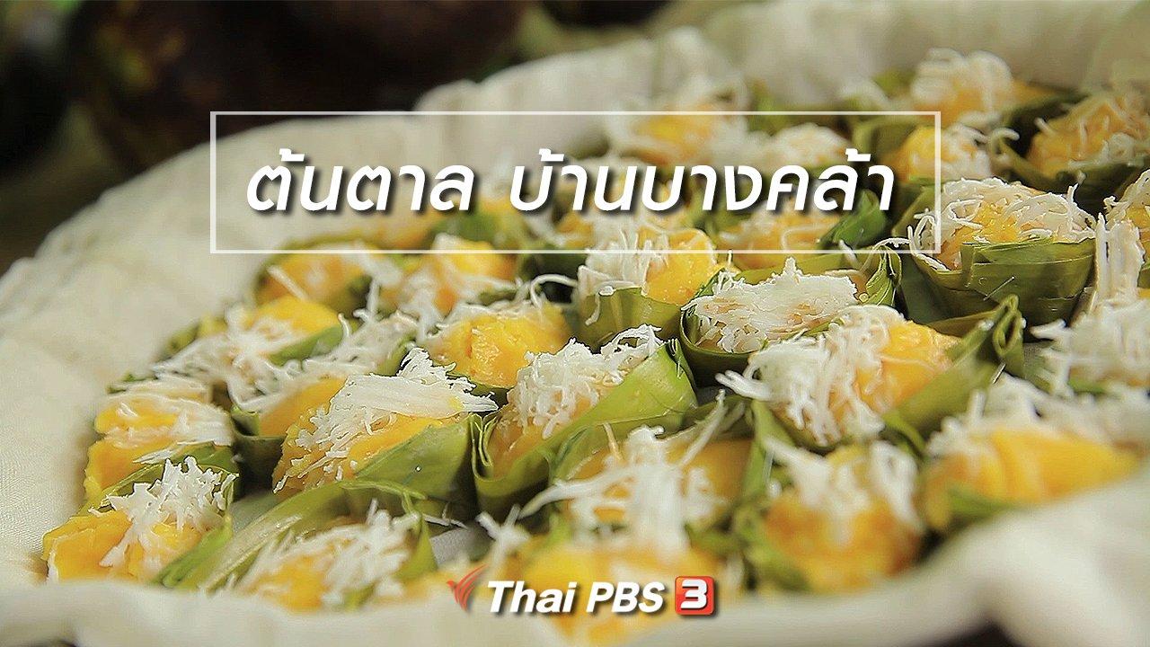 ทั่วถิ่นแดนไทย - เรียนรู้วิถีไทย : ต้นตาล บ้านบางคล้า