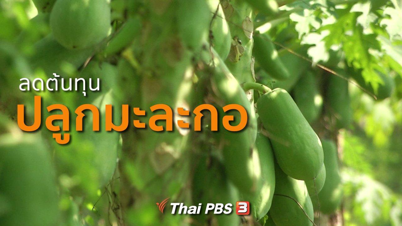 ทุกทิศทั่วไทย - อาชีพทั่วไทย : ลดต้นทุนปลูกมะละกอ
