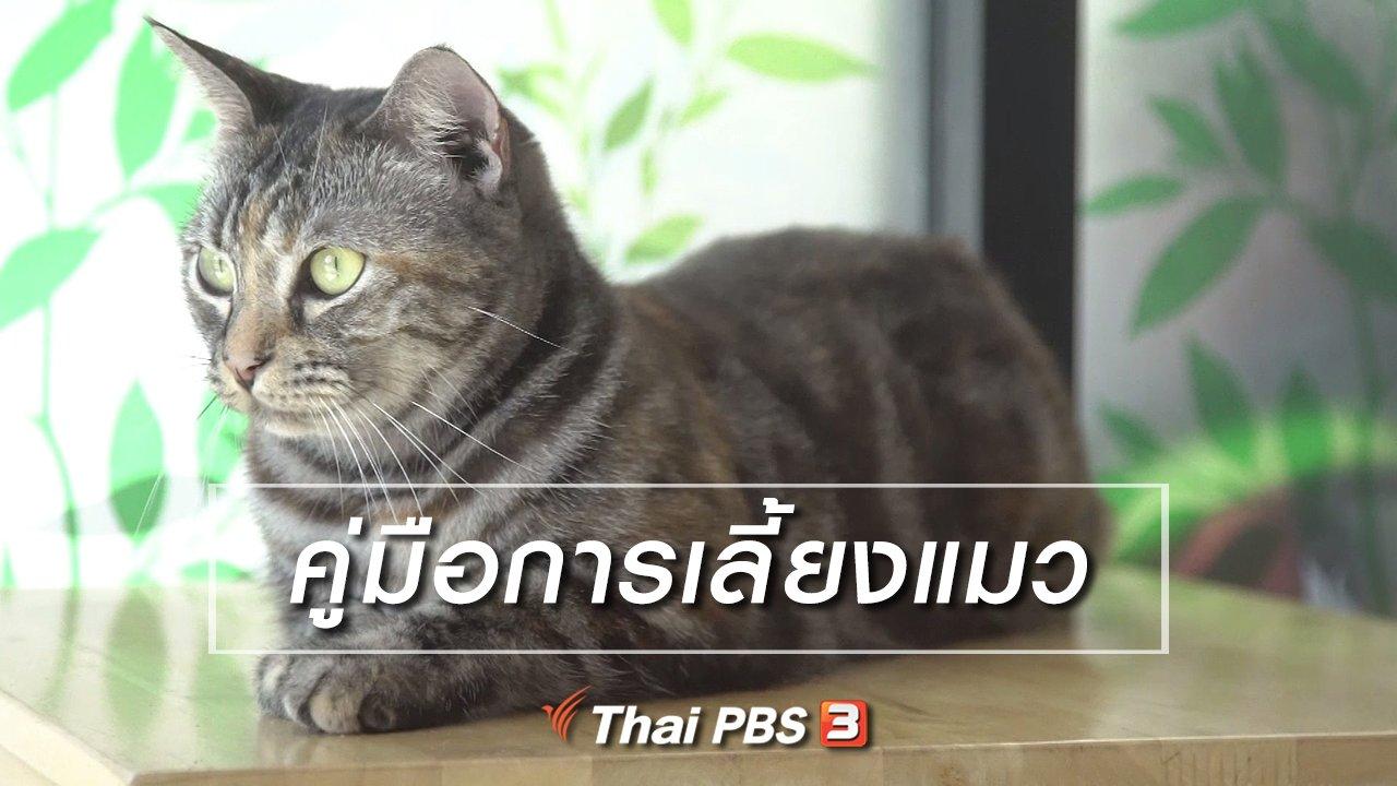 ลุยไม่รู้โรย สูงวัยดี๊ดี - ห้องเรียนสูงวัย : คู่มือการเลี้ยงแมว