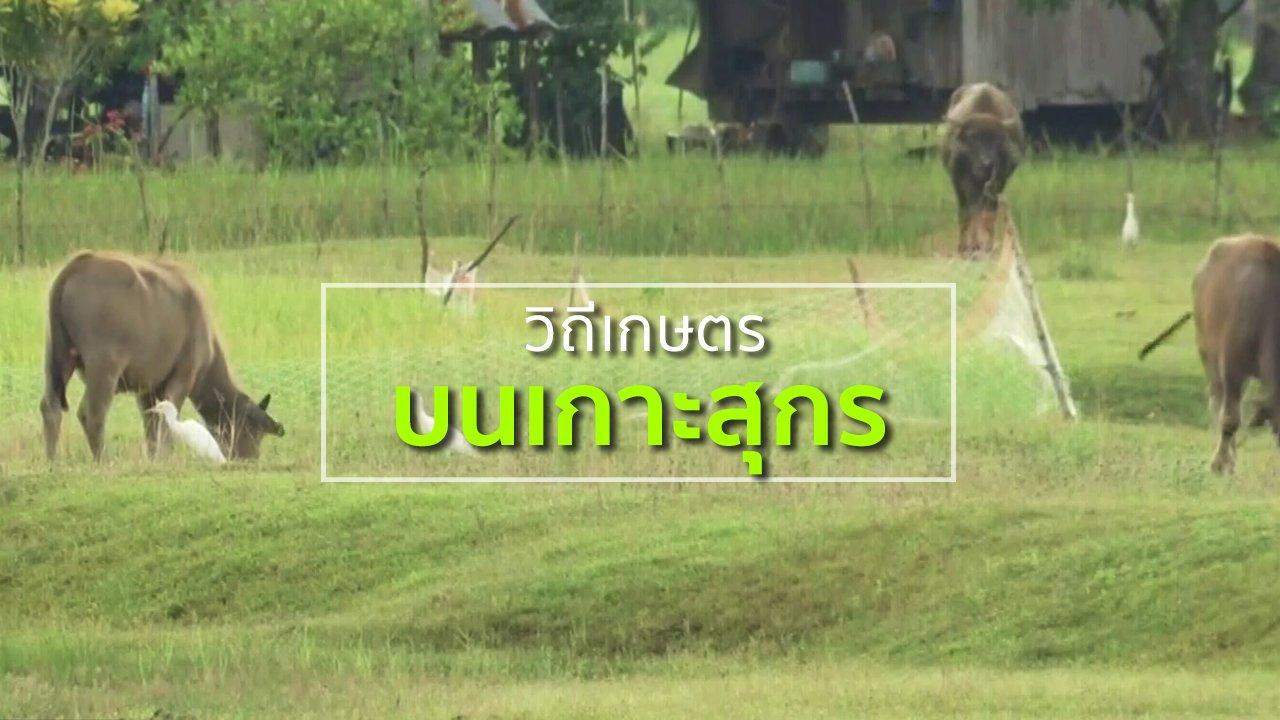 ทุกทิศทั่วไทย - ชุมชนทั่วไทย : ชมวิถีเกษตรบนเกาะสุกร