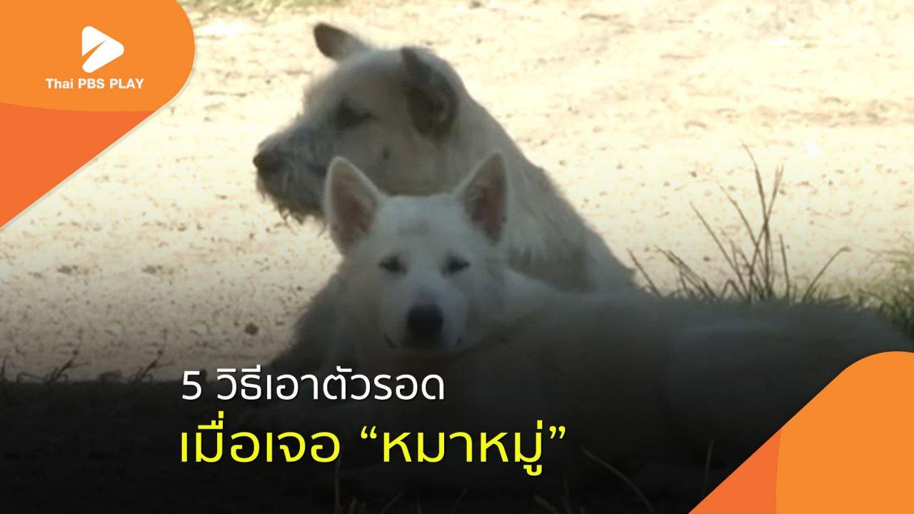 Thai PBS Play - 5 วิธีเอาตัวรอดเมื่อเจอหมาหมู่