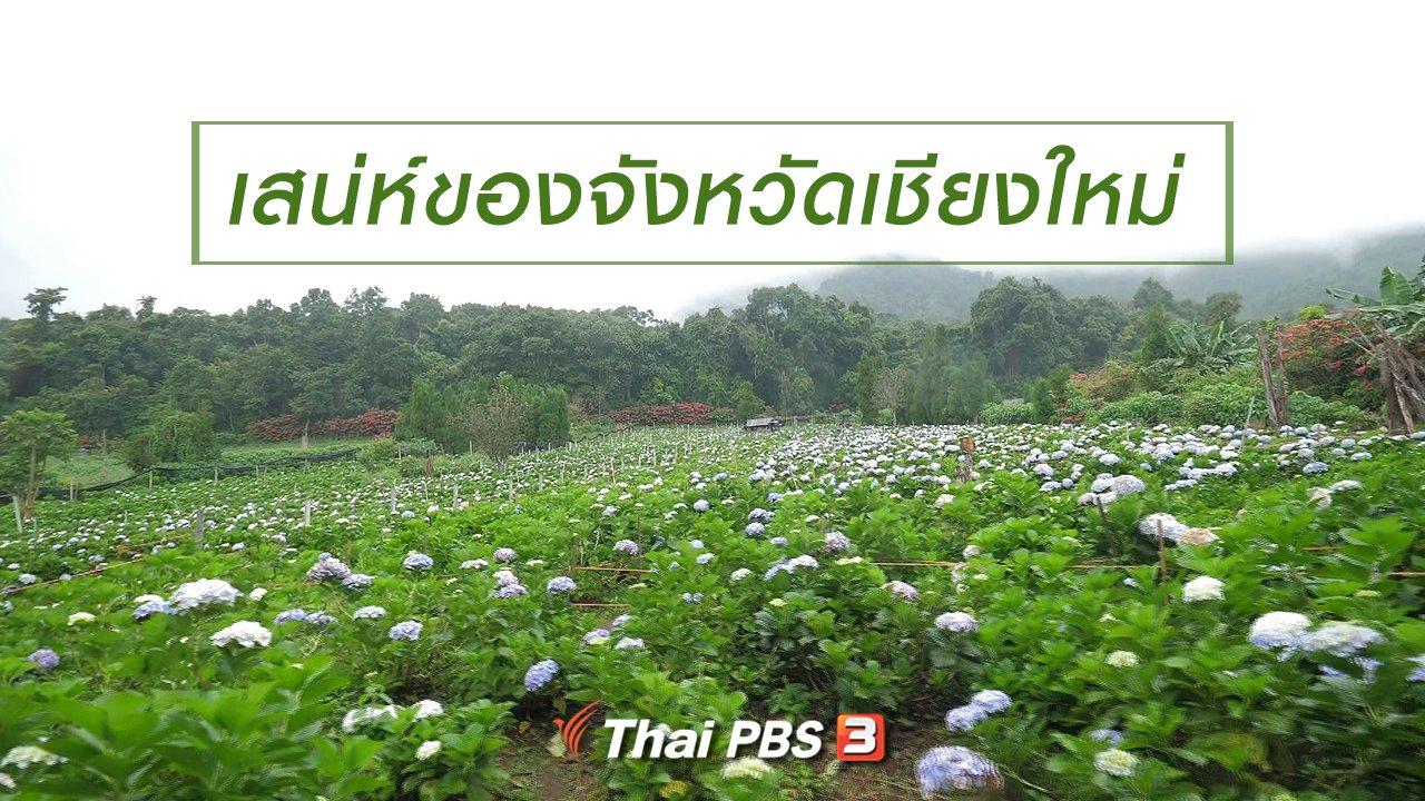 เที่ยวไทยไม่ตกยุค - เที่ยวทั่วไทย : เสน่ห์ของจังหวัดเชียงใหม่