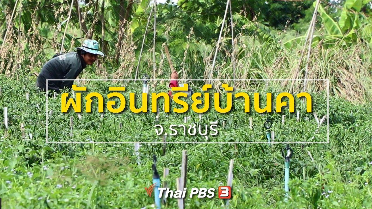 ทุกทิศทั่วไทย - อาชีพทั่วไทย : ผักอินทรีย์บ้านคา จ.ราชบุรี