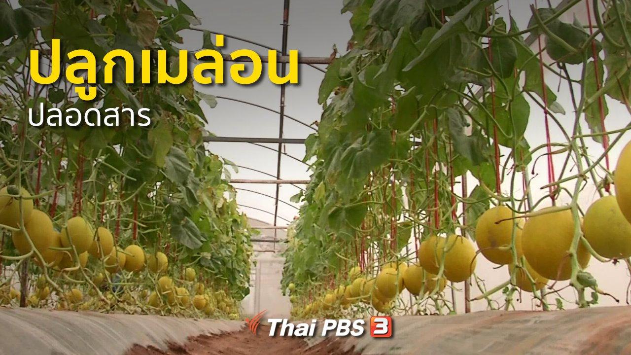 ทุกทิศทั่วไทย - อาชีพทั่วไทย : ปลูกเมล่อนปลอดสาร