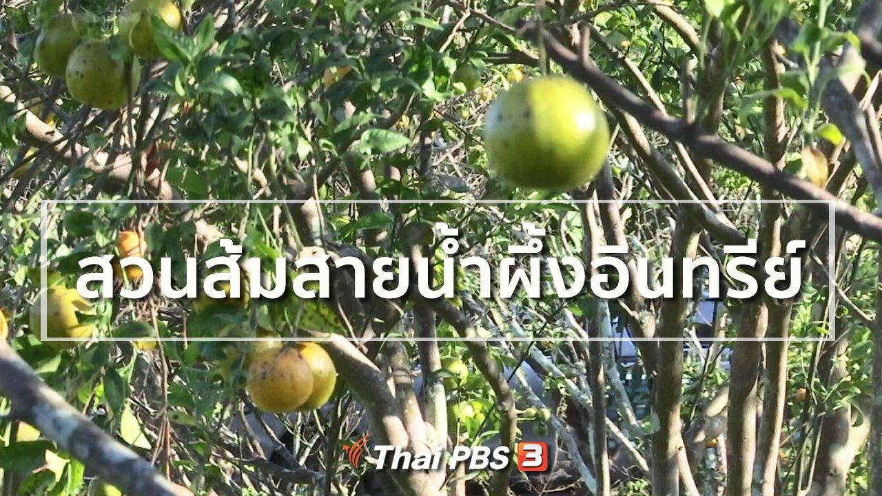 ทุกทิศทั่วไทย - อาชีพทั่วไทย : สวนส้มสายน้ำผึ้งอินทรีย์