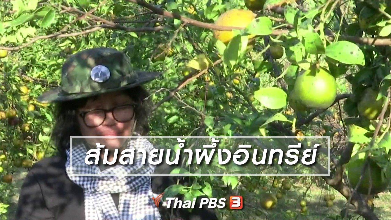 จับตาสถานการณ์ - ตะลุยทั่วไทย : ส้มสายน้ำผึ้งอินทรีย์