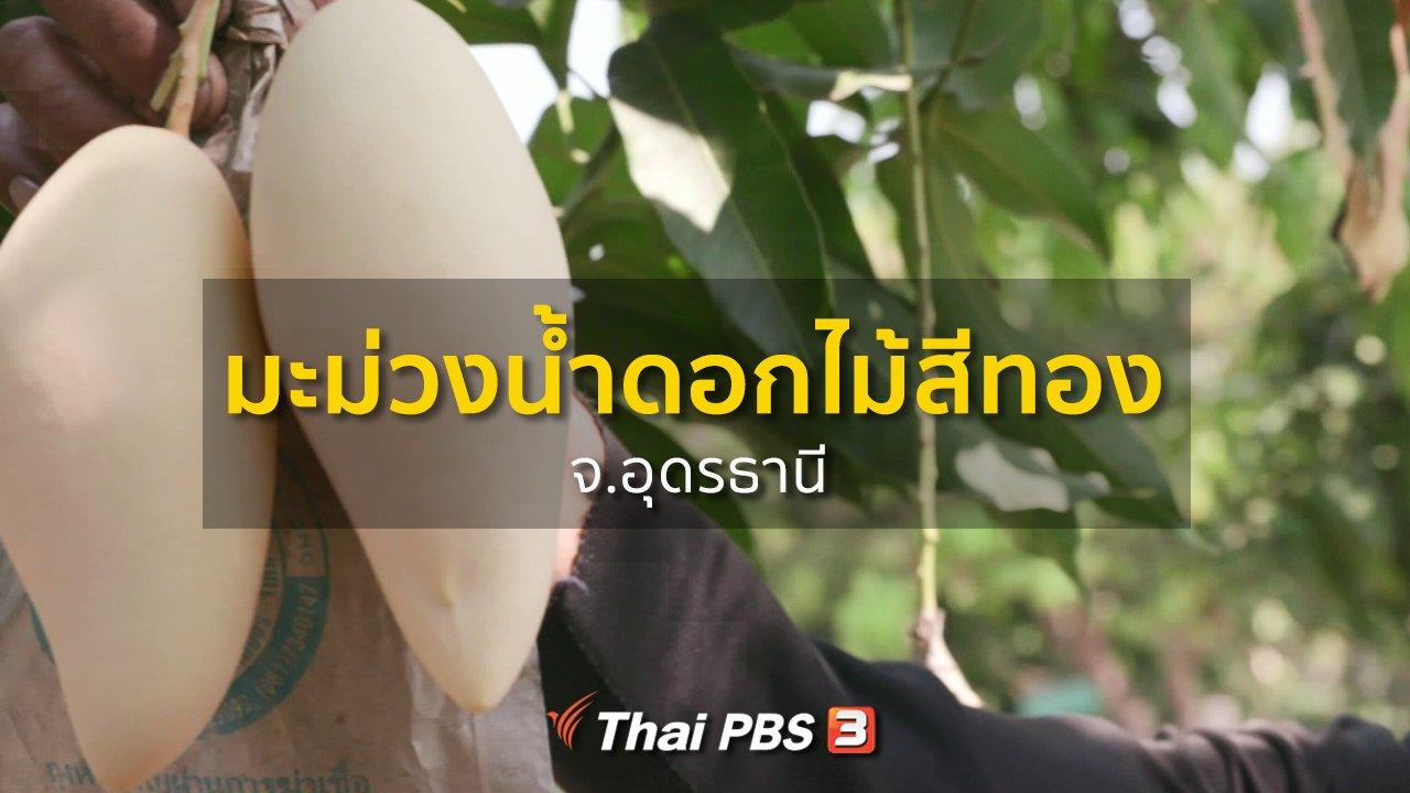 ทุกทิศทั่วไทย - ชุมชนทั่วไทย : มะม่วงน้ำดอกไม้สีทอง จ.อุดรธานี