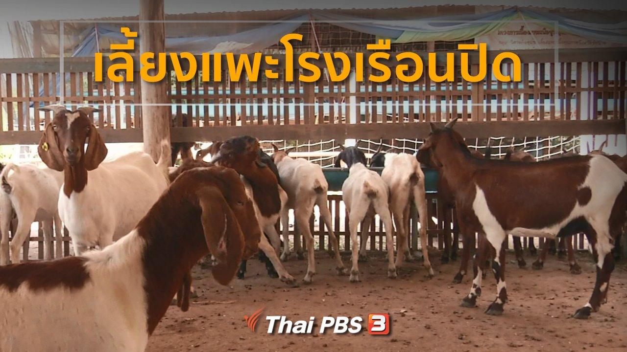 ทุกทิศทั่วไทย - อาชีพทั่วไทย : เลี้ยงแพะโรงเรือนปิด จ.ชัยนาท
