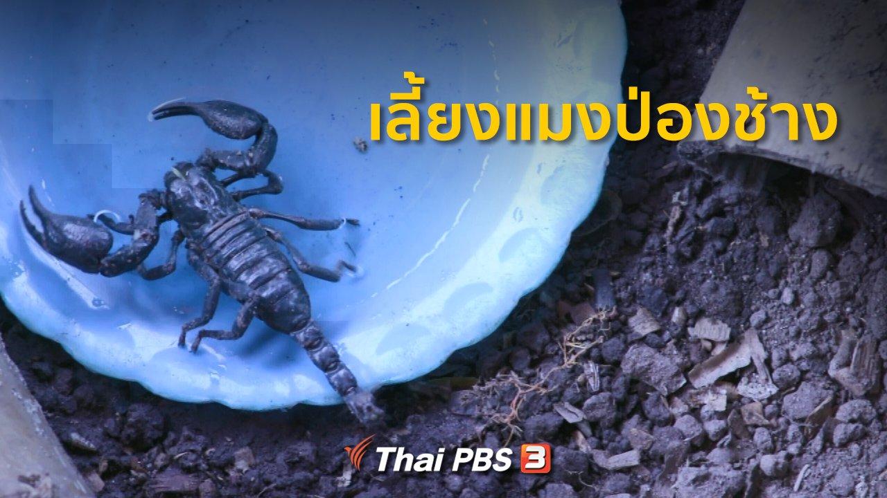 ทุกทิศทั่วไทย - ชุมชนทั่วไทย : เลี้ยงแมงป่องช้างขายสร้างรายได้เสริม