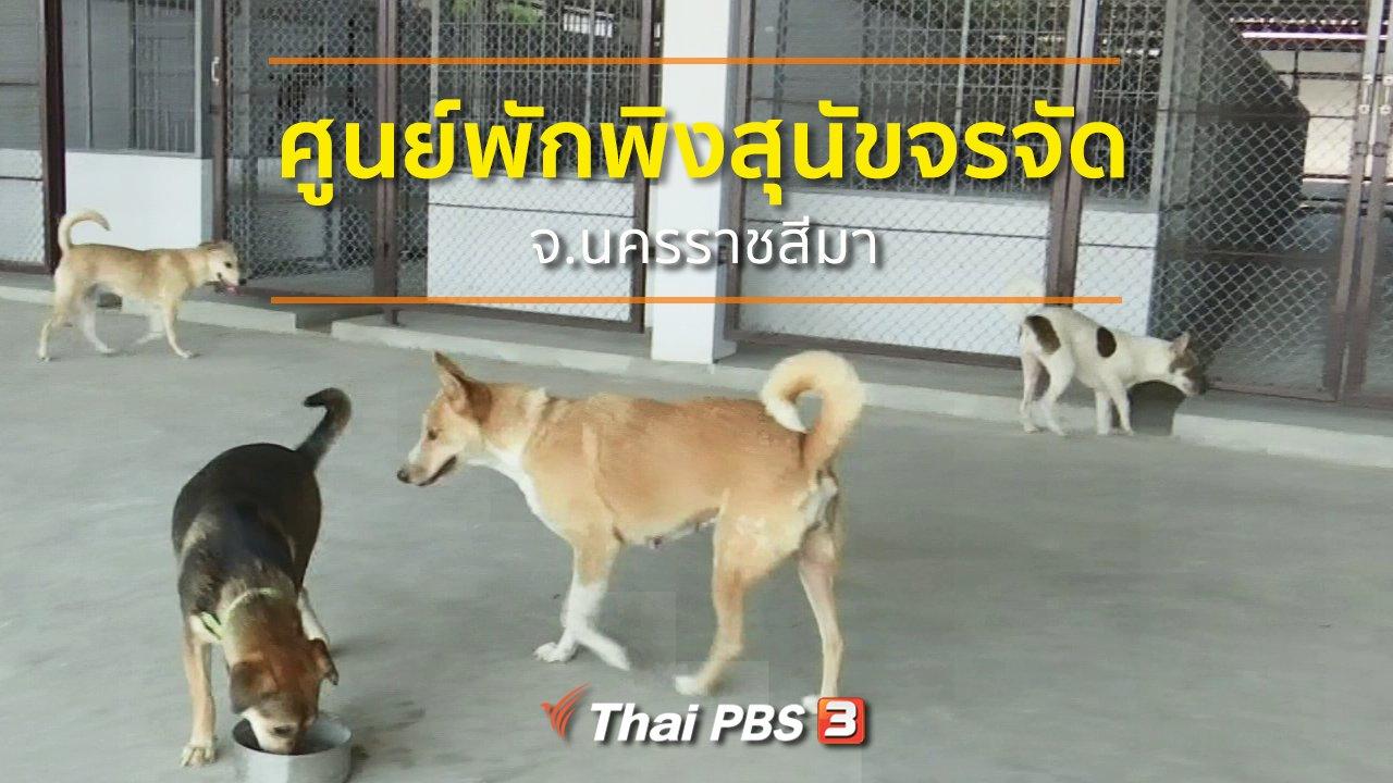 ทุกทิศทั่วไทย - ชุมชนทั่วไทย : ศูนย์พักพิงสุนัขจรจัด จ.นครราชสีมา