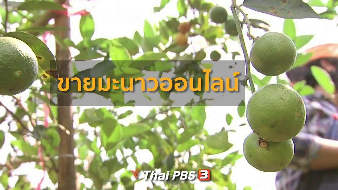 ทุกทิศทั่วไทย - อาชีพทั่วไทย : ขายมะนาวออนไลน์