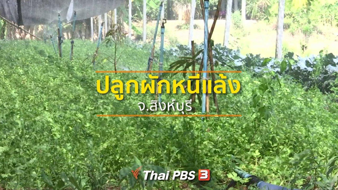 ทุกทิศทั่วไทย - ชุมชนทั่วไทย : เปลี่ยนทำนาปลูกผักหนีแล้ง จ.สิงห์บุรี