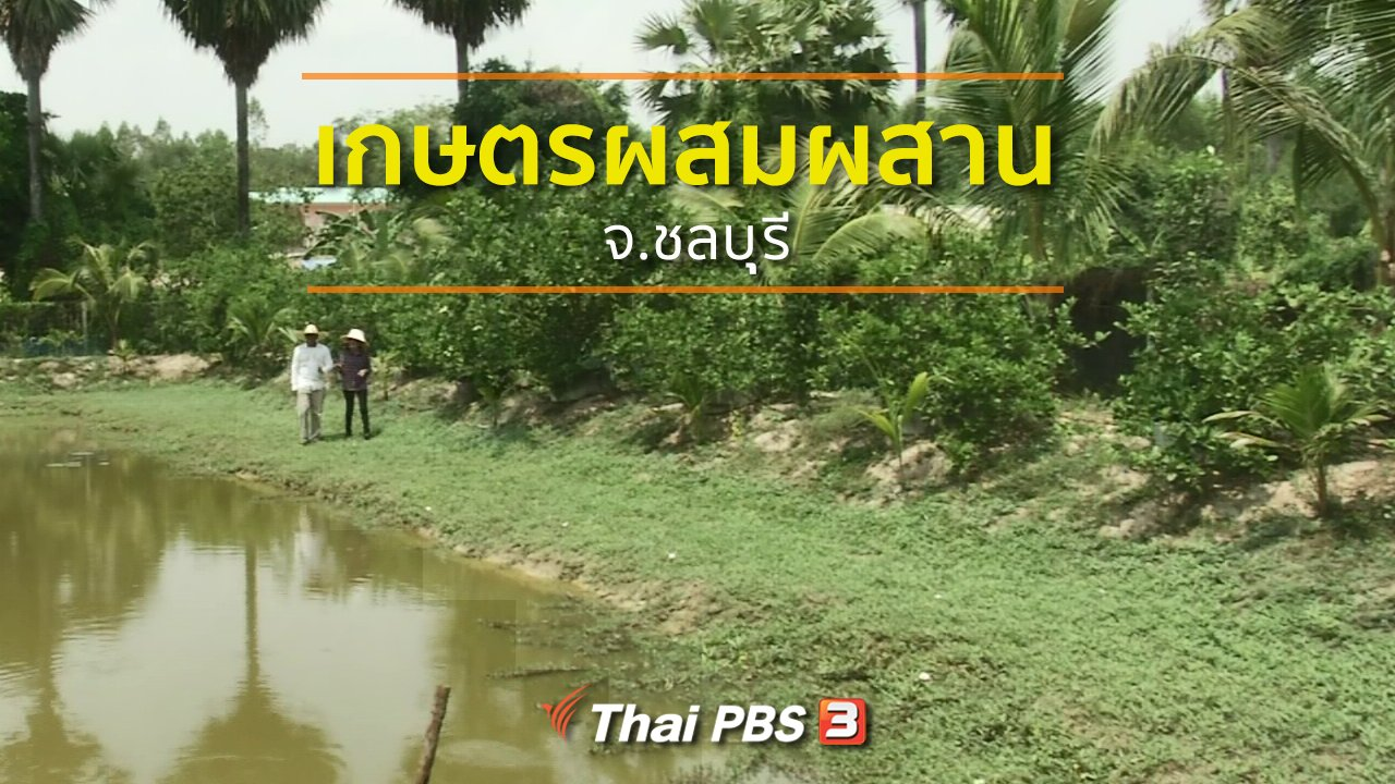 ทุกทิศทั่วไทย - ชุมชนทั่วไทย : ทำเกษตรผสมผสานรายได้ดี จ.ชลบุุรี
