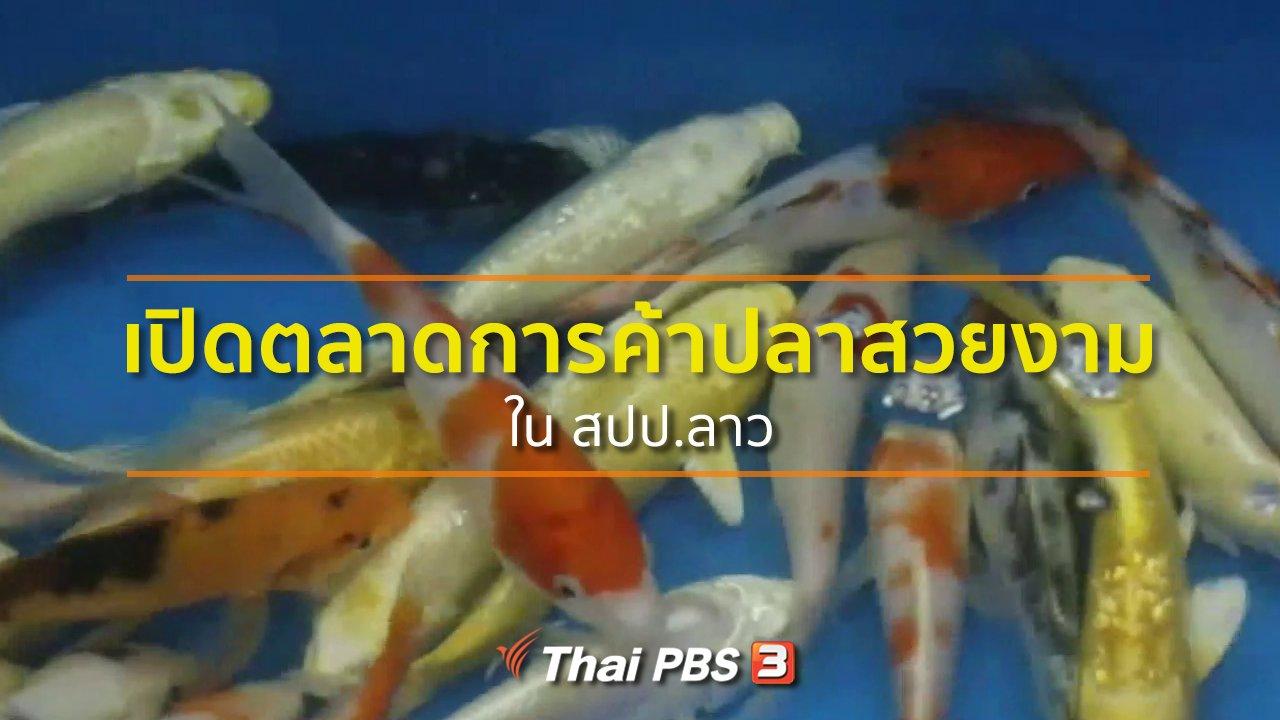 ทุกทิศทั่วไทย - อาชีพทั่วไทย : เปิดตลาดการค้าปลาสวยงามใน สปป.ลาว