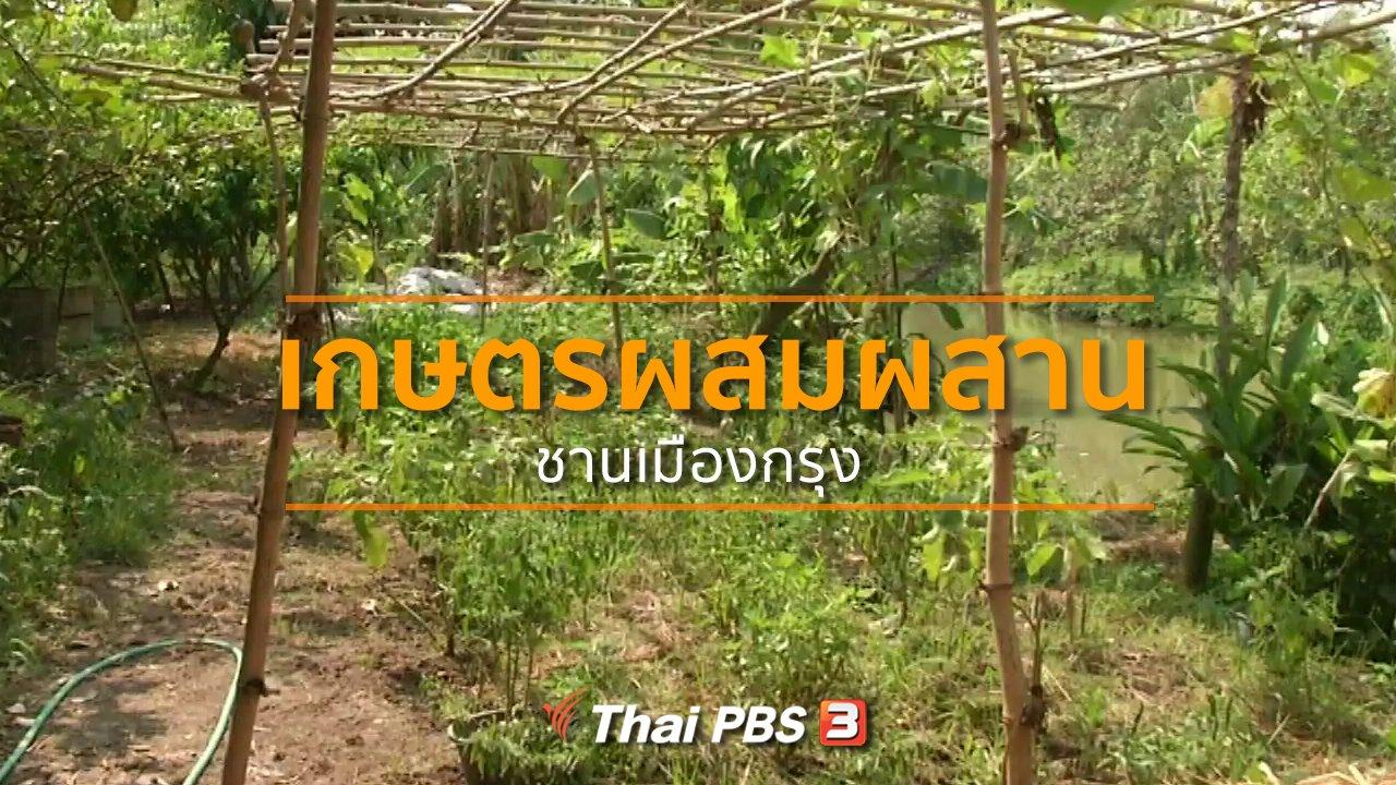 ทุกทิศทั่วไทย - ชุมชนทั่วไทย : ทำเกษตรผสมผสานชานเมืองกรุง