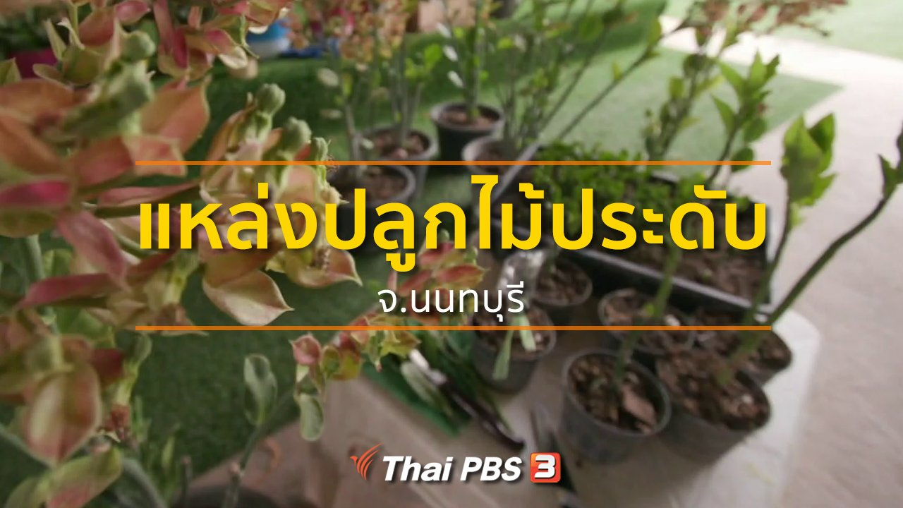 ทุกทิศทั่วไทย - ชุมชนทั่วไทย : แหล่งปลูกไม้ประดับ จ.นนทบุรี