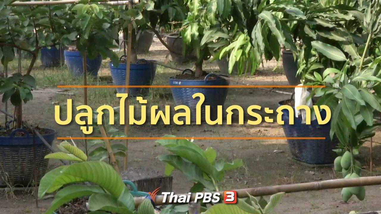 ทุกทิศทั่วไทย - ชุมชนทั่วไทย : เรียนรู้ปลูกไม้ผลในกระถาง