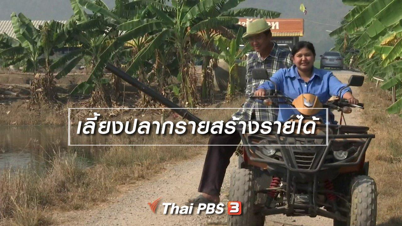 จับตาสถานการณ์ - ตะลุยทั่วไทย : เลี้ยงปลากรายสร้างรายได้
