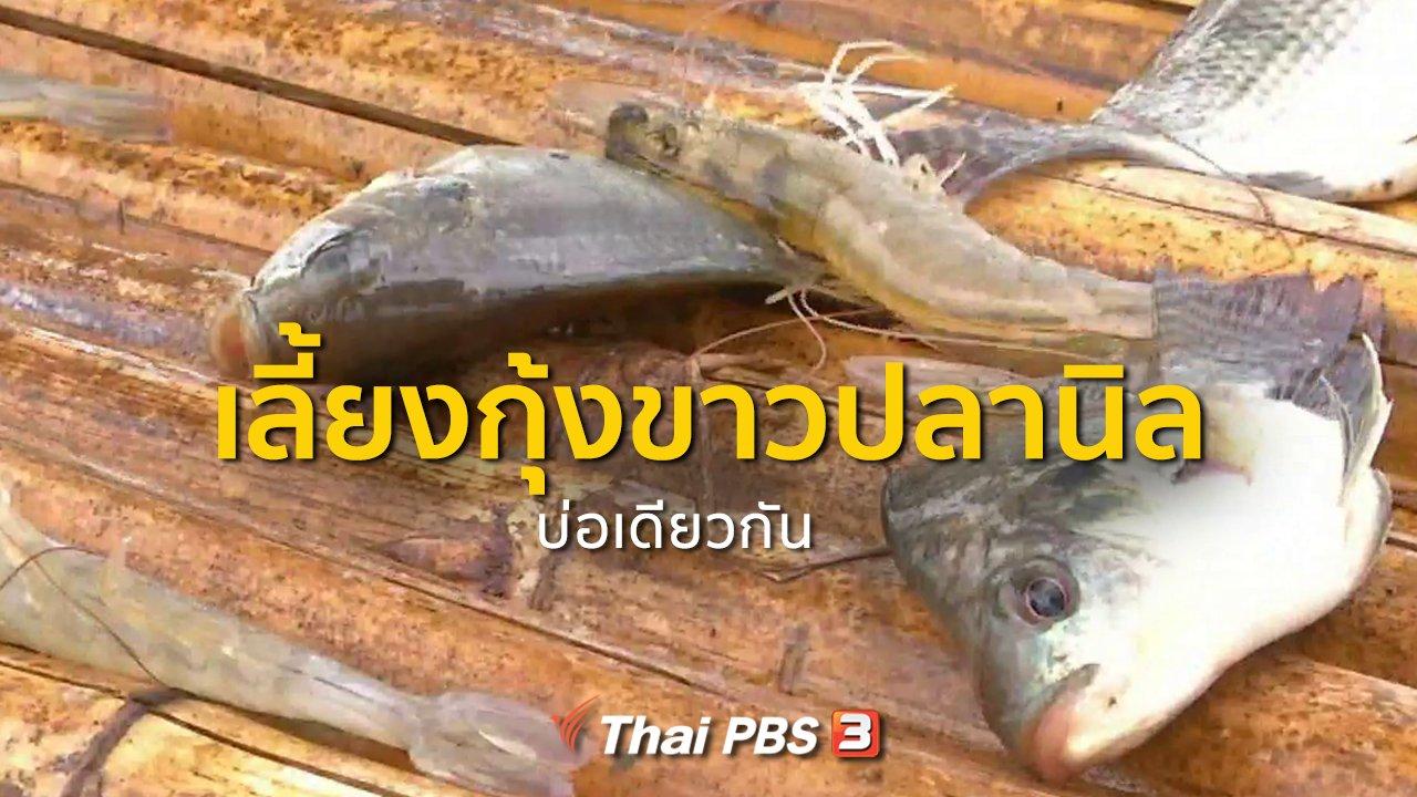 ทุกทิศทั่วไทย - อาชีพทั่วไทย : เลี้ยงกุ้งขาวปลานิลบ่อเดียวกัน