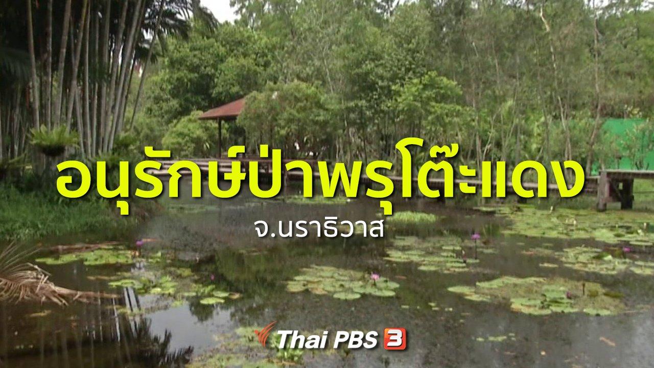 ทุกทิศทั่วไทย - ชุมชนทั่วไทย : อนุรักษ์ป่าพรุโต๊ะแดง จ.นราธิวาส