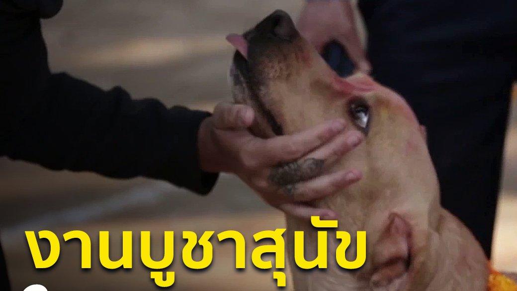 Spirit of Asia - งานบูชาสุนัขในเนปาล
