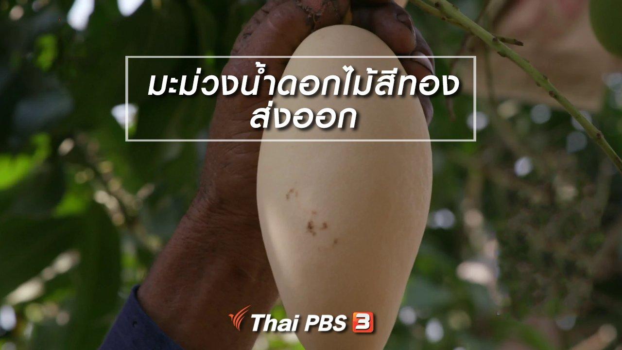 จับตาสถานการณ์ - ตะลุยทั่วไทย : มะม่วงน้ำดอกไม้สีทองส่งออก