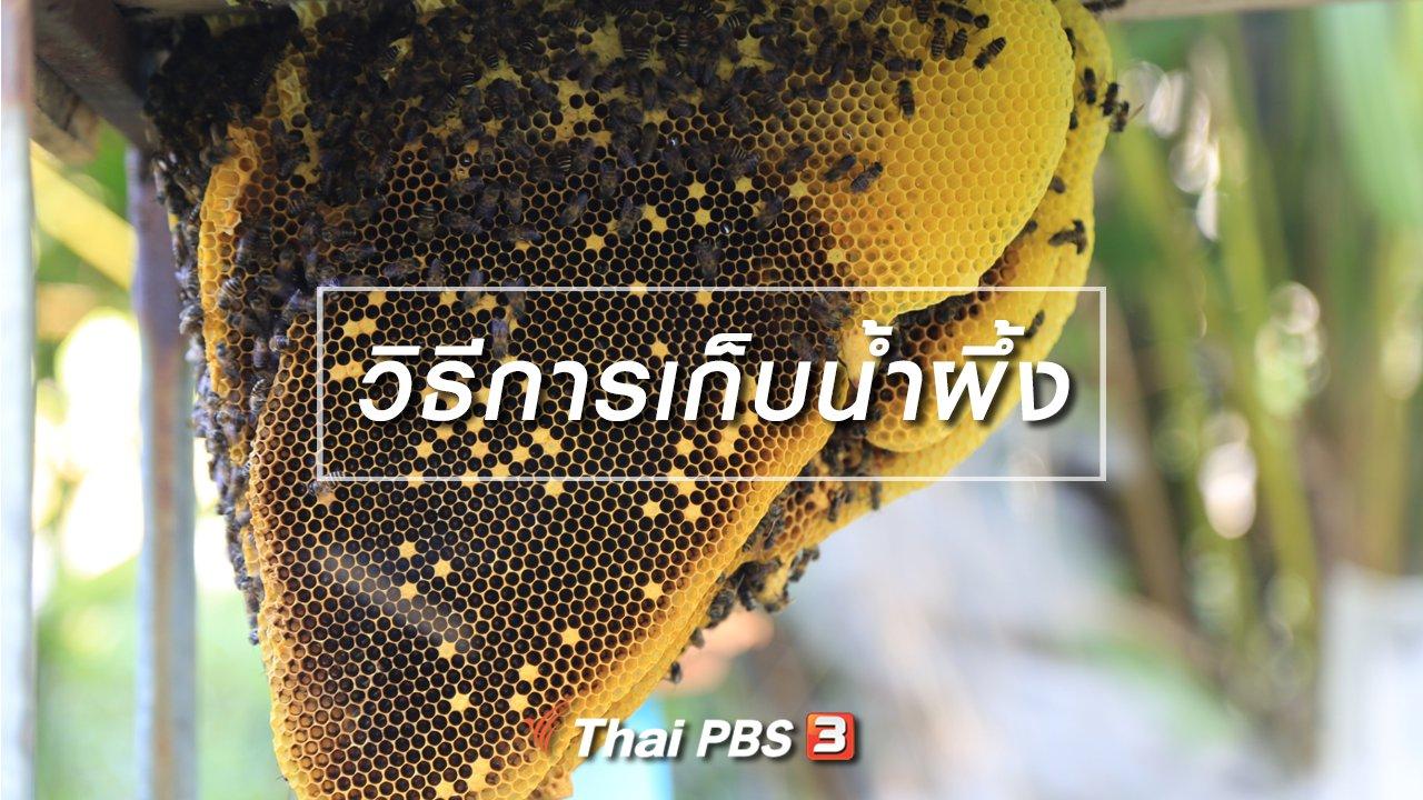 ทั่วถิ่นแดนไทย - วิธีการเก็บน้ำผึ้ง