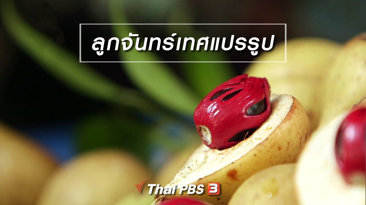 จับตาสถานการณ์ - ตะลุยทั่วไทย : ลูกจันทร์เทศแปรรูป