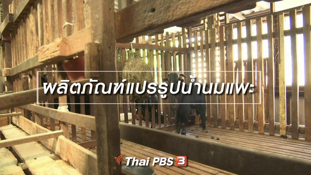 จับตาสถานการณ์ - ตะลุยทั่วไทย : ผลิตภัณฑ์แปรรูปน้ำนมแพะ