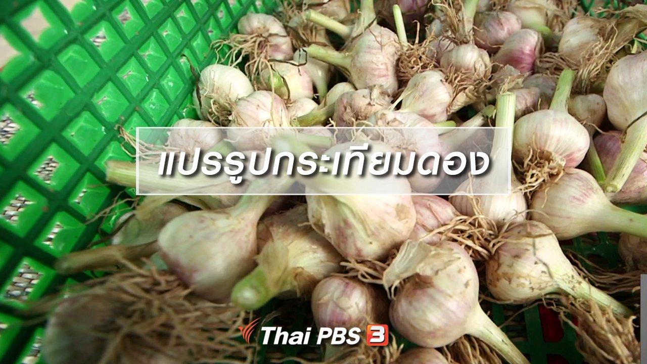 จับตาสถานการณ์ - ตะลุยทั่วไทย : แปรรูปกระเทียมดอง