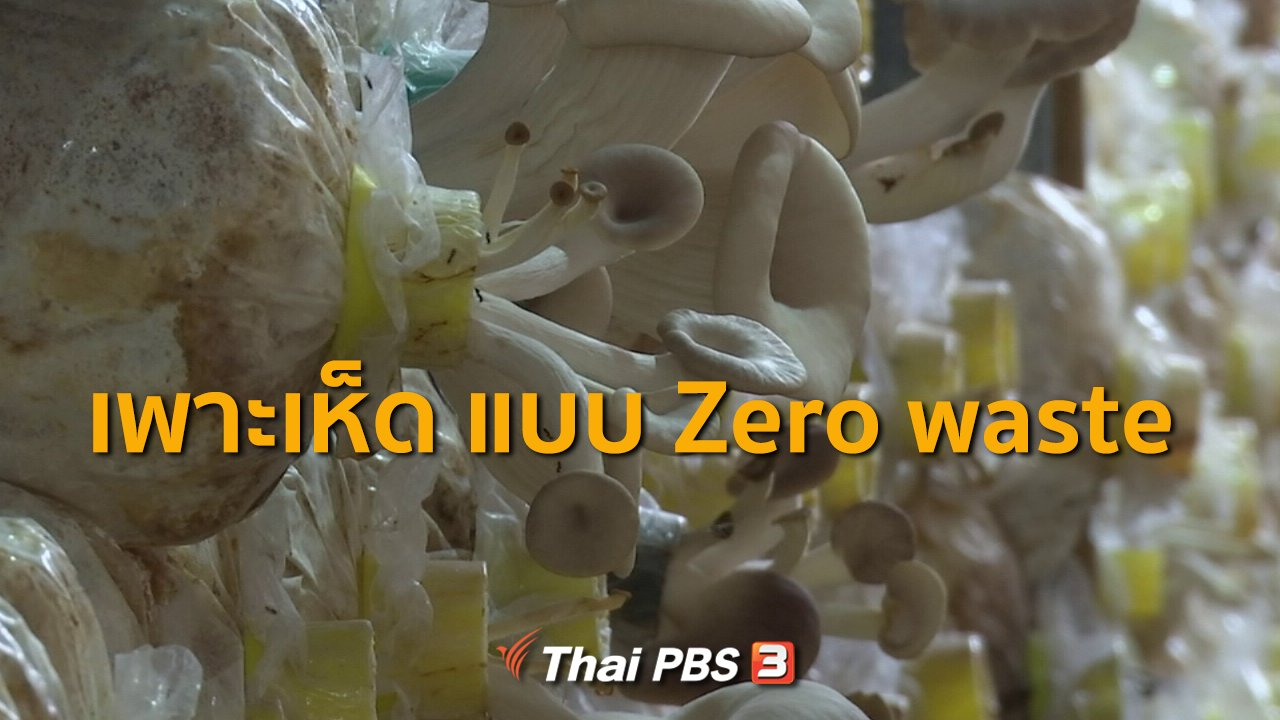 ทุกทิศทั่วไทย - ชุมชนทั่วไทย : เพาะเห็ดครบวงจรไม่เหลือขยะ จ.สมุทรปราการ