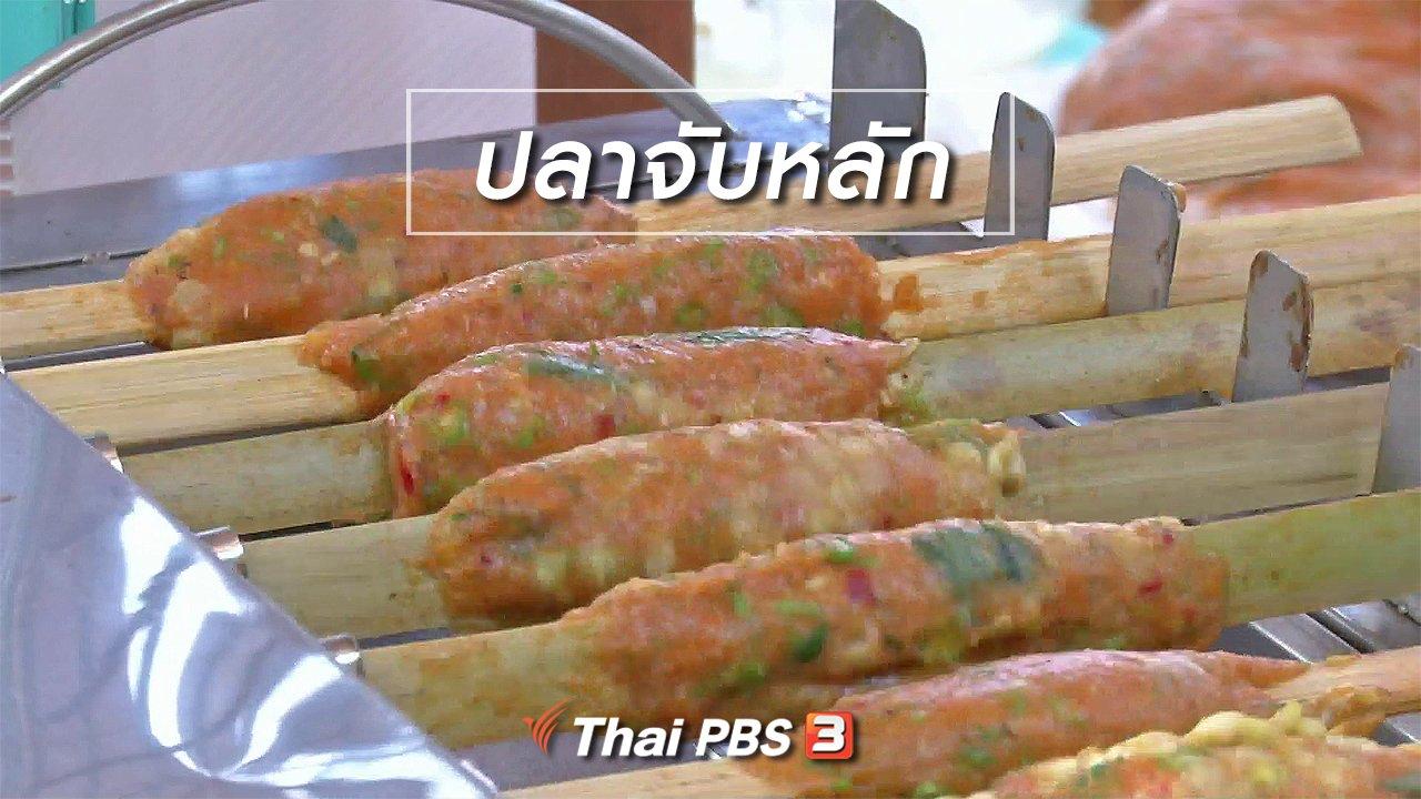 จับตาสถานการณ์ - ตะลุยทั่วไทย : ปลาจับหลัก