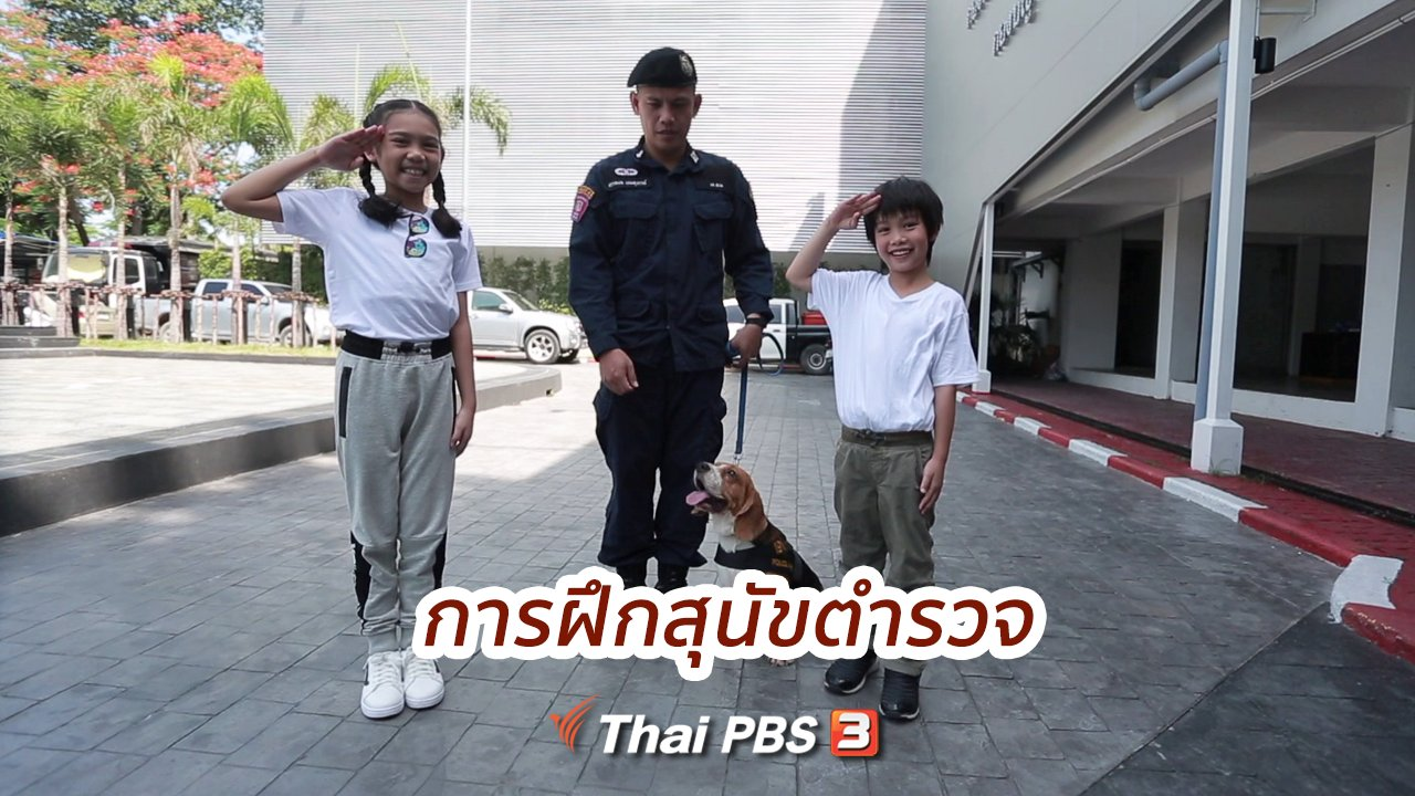 คิดส์ทันข่าว - คิดส์ขยายข่าว : การฝึกสุนัขตำรวจ