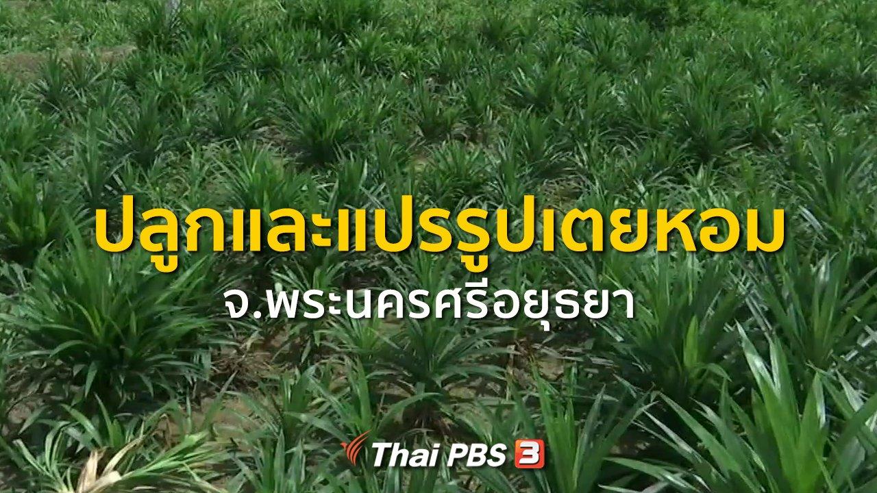 ทุกทิศทั่วไทย - อาชีพทั่วไทย : ปลูกแปรรูปเตยหอม
