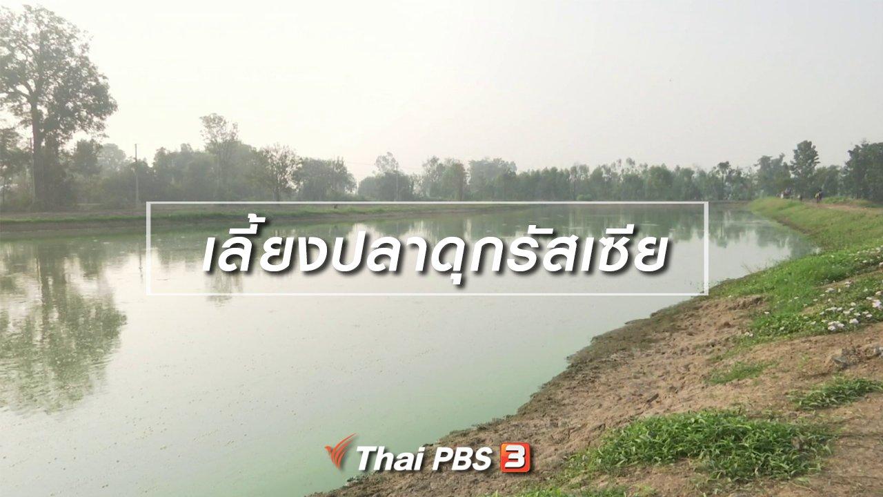 จับตาสถานการณ์ - ตะลุยทั่วไทย : เลี้ยงปลาดุกรัสเซีย