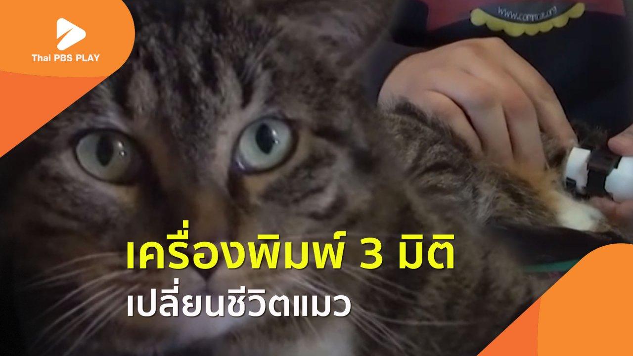 Thai PBS Play - เครื่องพิมพ์ 3 มิติ เปลี่ยนชีวิตแมว