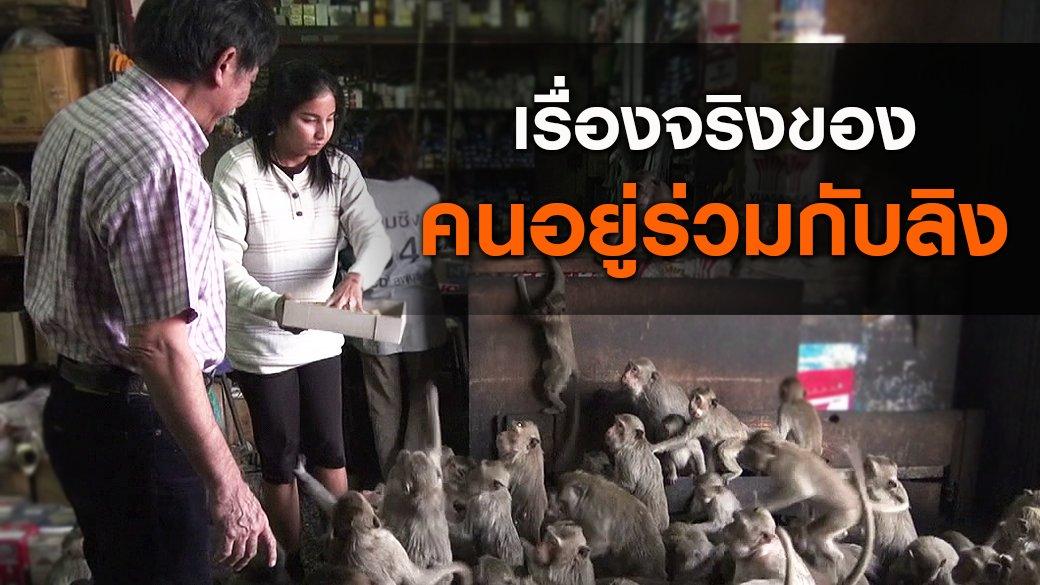 สัตว์ป่วนเมือง - เรื่องจริงของคนอยู่ร่วมกับลิง