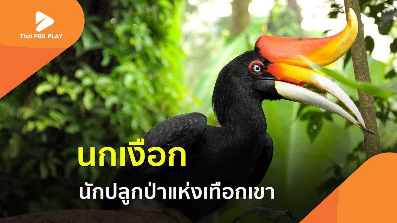 Thai PBS Play - นกเงือก นักปลูกป่าแห่งเทือกเขา