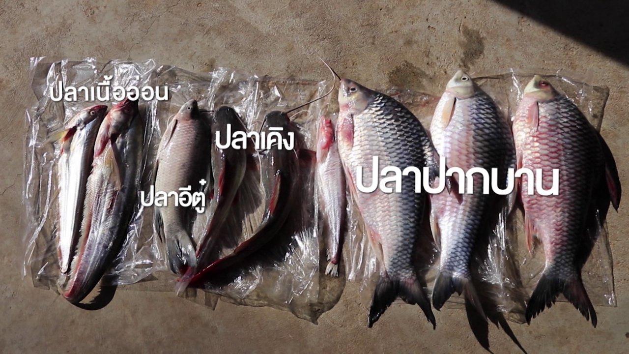 ซีรีส์วิถีคน - วิถีหาปลาที่แม่น้ำโขง