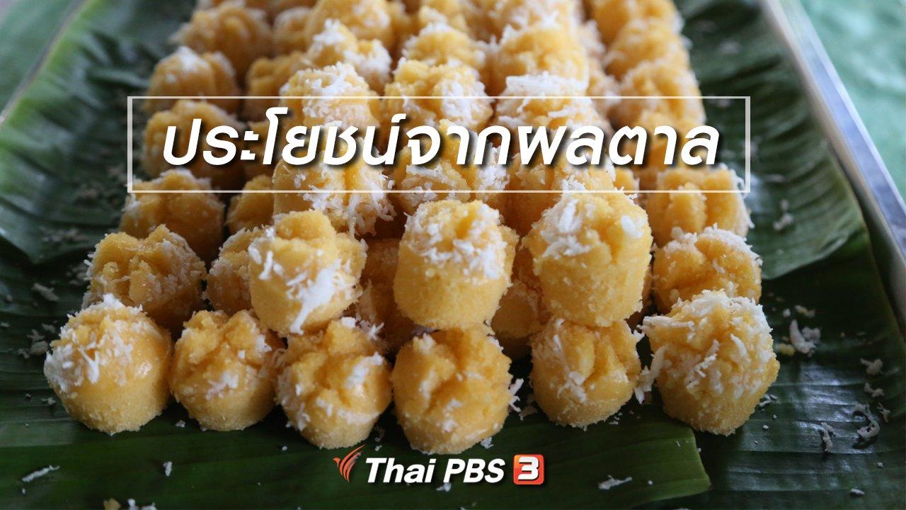 ทั่วถิ่นแดนไทย - เรียนรู้วิถีไทย : ประโยชน์จากผลตาล