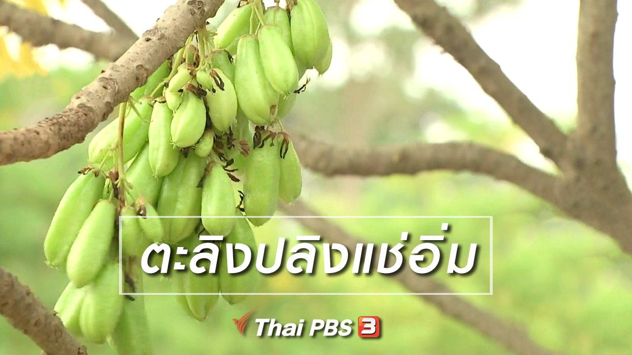 จับตาสถานการณ์ - ตะลุยทั่วไทย : ตะลิงปลิงแช่อิ่ม